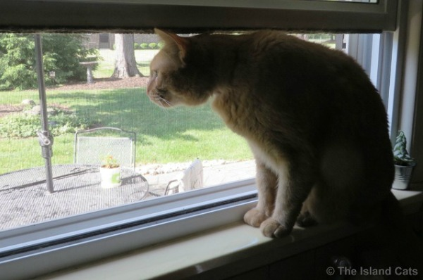 I know you're out there, introoder cat