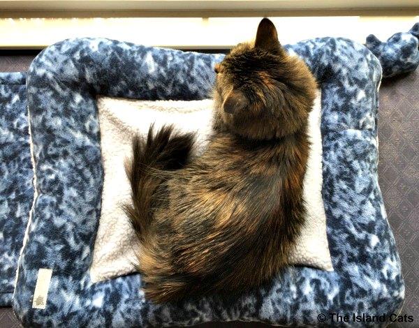 pet kitten runescape