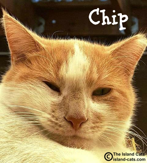 Chip Feral Cat Day selfie