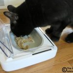 SureFeed® Sealed Pet Bowl for the Slow-Eater