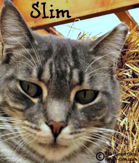 Slim Feral Cat Day selfie