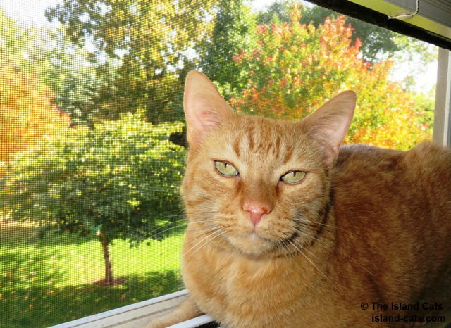 My orange furs go with the fall colors