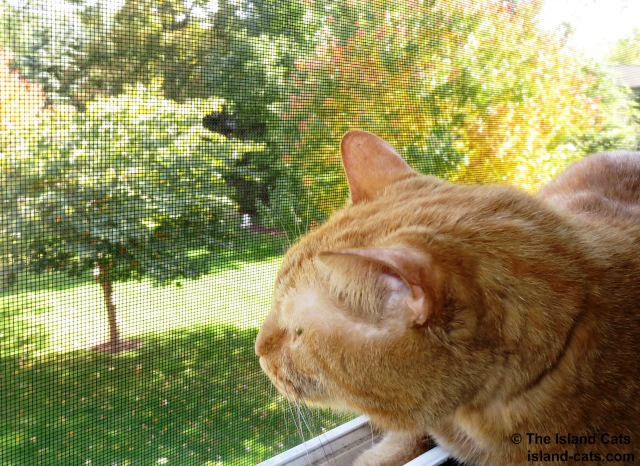 Fall air smells different than spring or summer air
