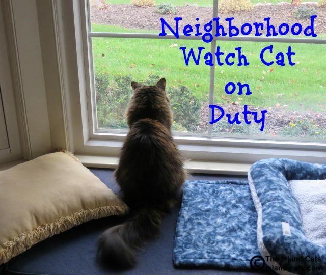 The neighborhood watch cat is on duty