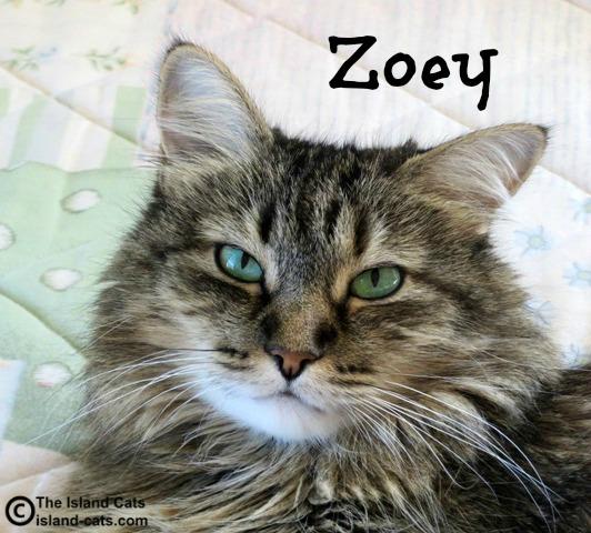 Zoey Feral Cat Day selfie