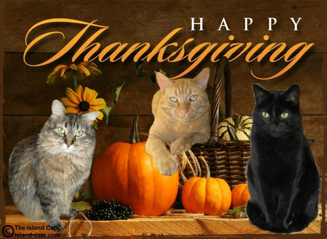 Image result for happy thanksgiving cats