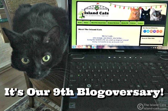 Happy Blogoversary to Us!