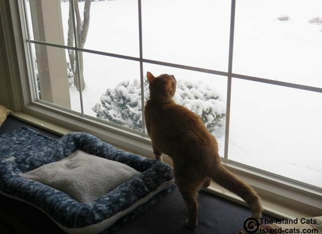 It's still snowing