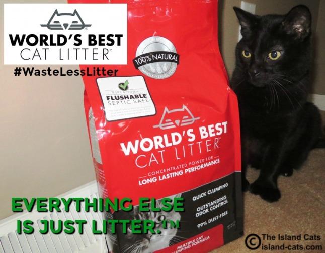 Ernie with World's Best Cat Litter #WasteLessLitter