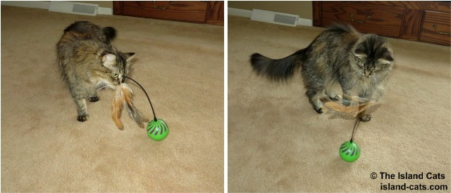 Zoey playing with Feather Whirl
