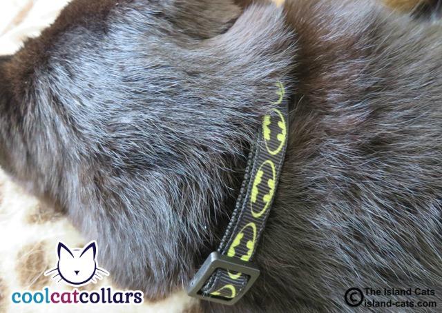 Batman Cool Cat Collar