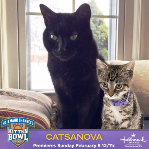 I took a selfie with Catsanova