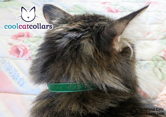 Green Velvet Cool Cat Collar