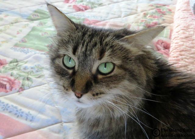 Zoey has pretty green eyes