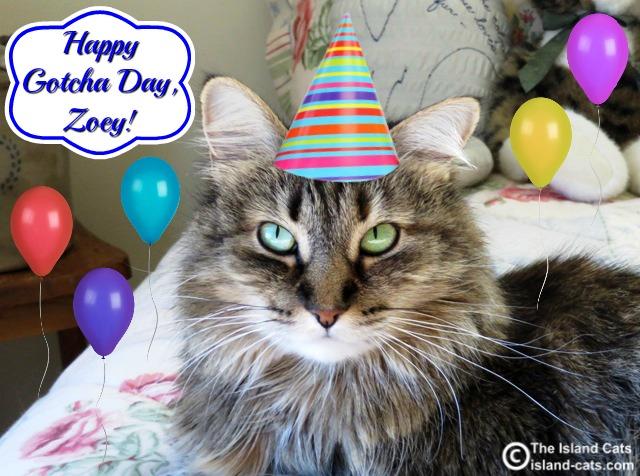 Happy Gotcha Day, Zoey!