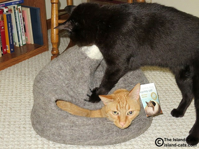 This is not how you use the Dharma Dog Karma Cat bed!