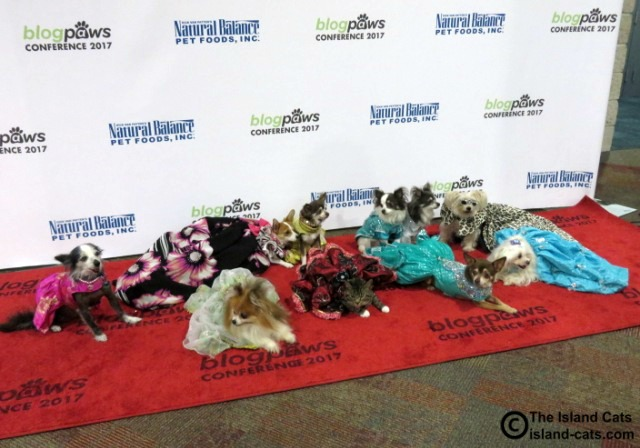 Little dogs on the red carpet
