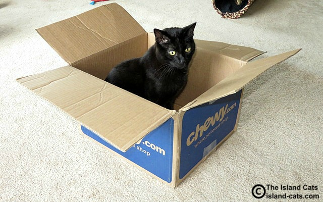 A box is a cat magnet
