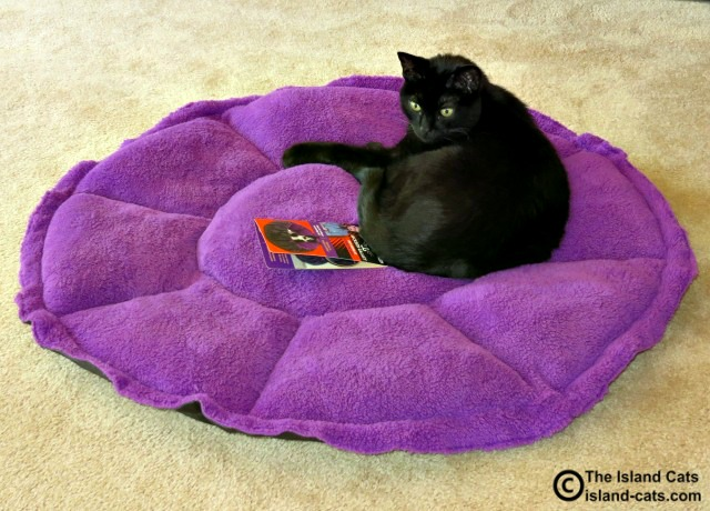Ernie on Petmate Jackson Galaxy Comfy Clamshell