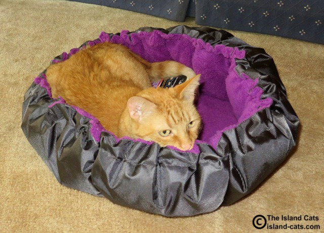 Wally in Petmate Jackson Galaxy Comfy Clamshell