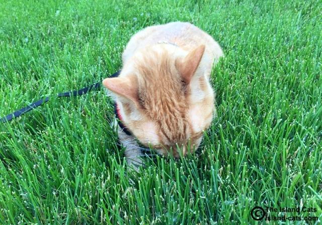I love nomming grass
