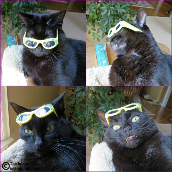 Blooper Sunglasses Selfies