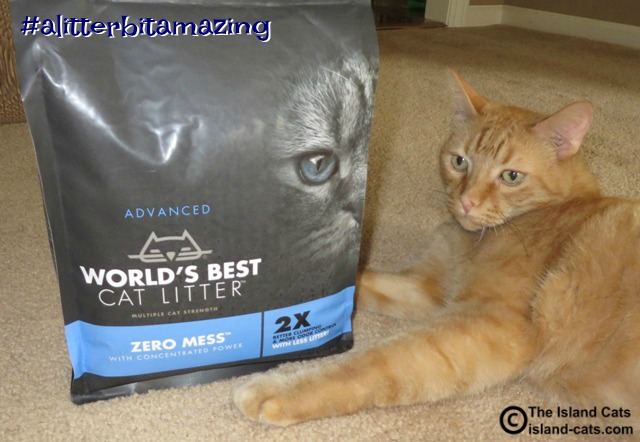 World's Best Cat Litter Zero Mess #alitterbitamazing
