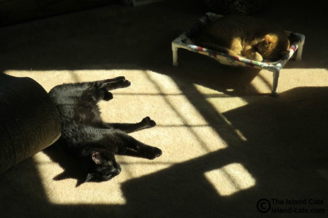 This is a mighty big sunpuddle