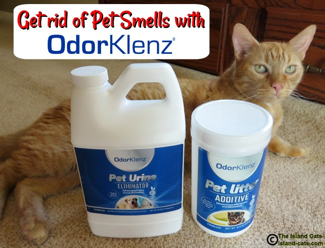 Get Rid of Pet Smells with OdorKlenz