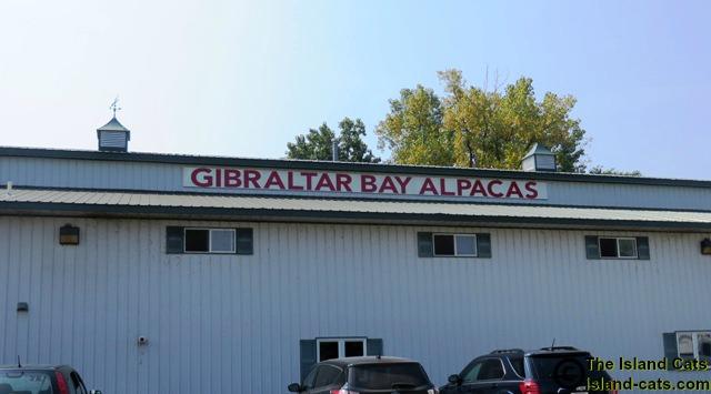 Gibraltar Bay Alpaca Farm