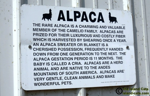 Sign at farm that tells all about alpacas