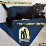Shine a Light on Orphan Pets Waiting for Forever Homes #RememberMeThursday #RememberTheRescue