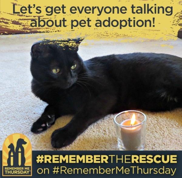 Let's talk about pet adoption #RememberMeThursday