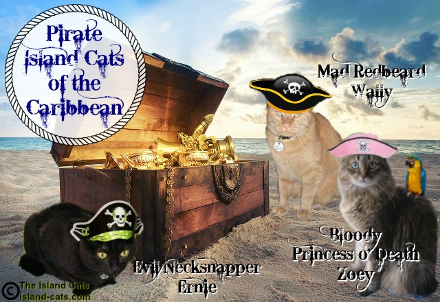 We be meowing like pirates