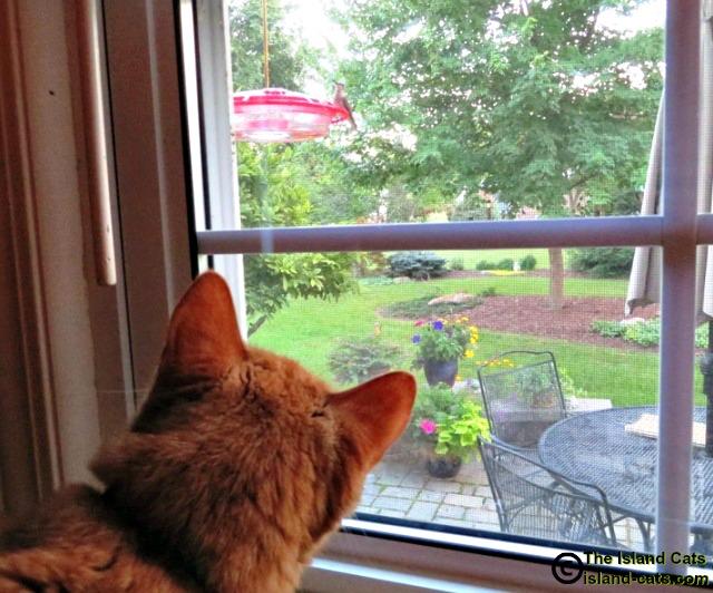 I'm watching a hummingbird