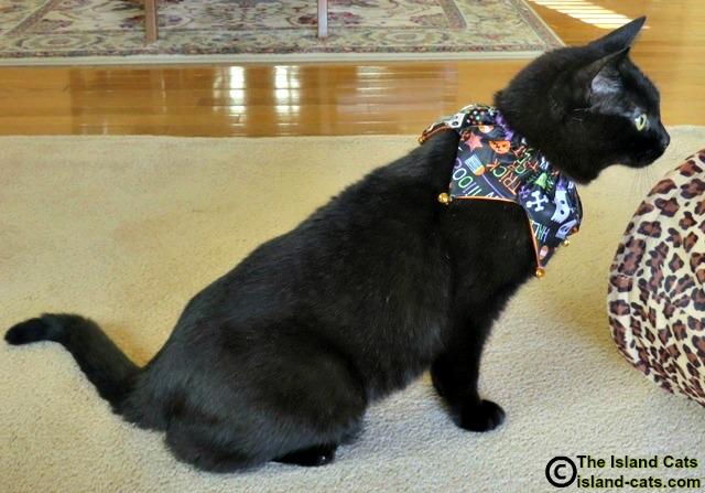 I'm modeling my Halloween collar.