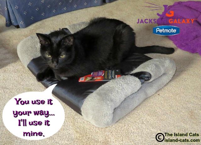 I'll use the Kitty Zip Mat any way I want