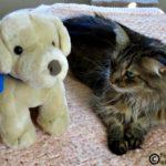 A Stubborn Stuffie