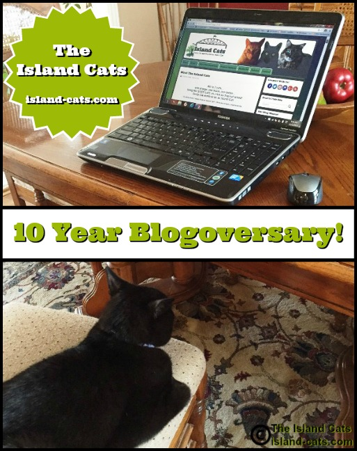 10 year blogoversary