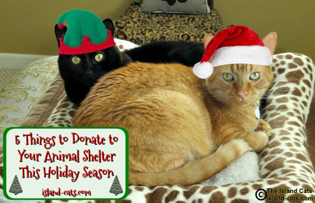 5 things to donate to your animal shelter
