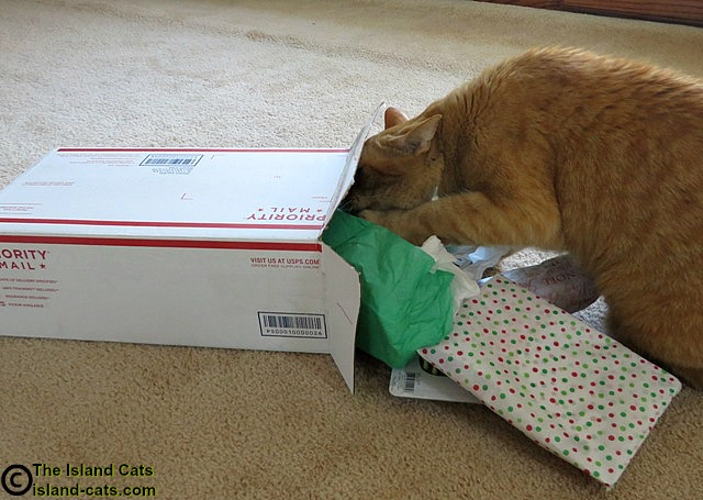 I'm opening our Secret Paws package