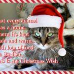 Zoey's Christmas Wish