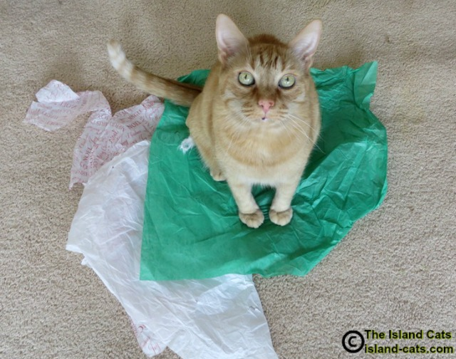 Don't take my tissue paper!