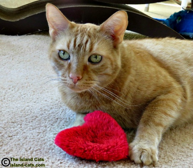 I'm sharing my nip heart with you today