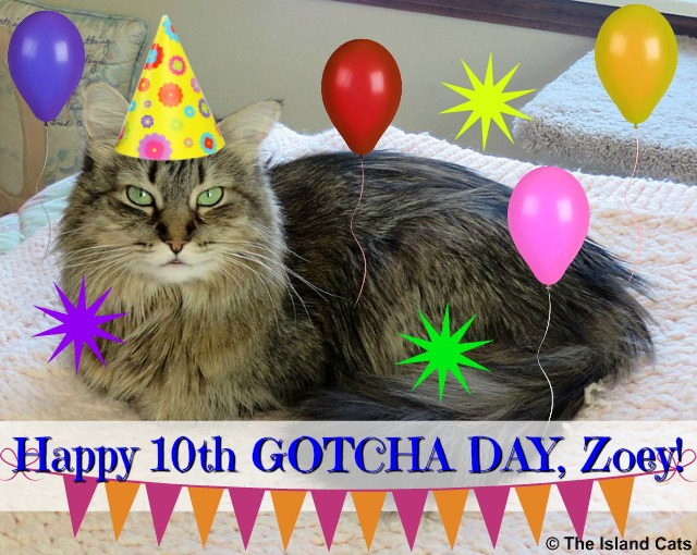 Happy Gotcha Day, Zoey!