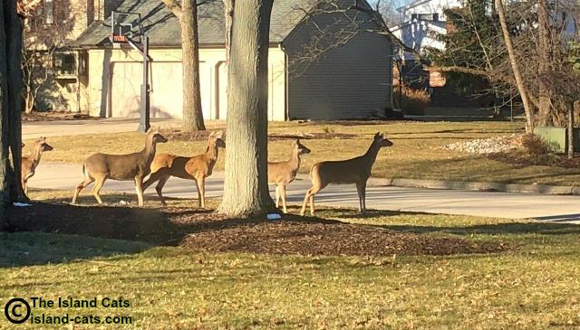 A herd of deer was in our yard