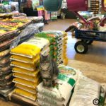 Hard Working Garden Center Cats