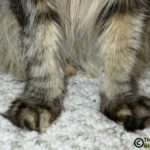 Footsie Friday - Fun Facts About a Cat's Paws