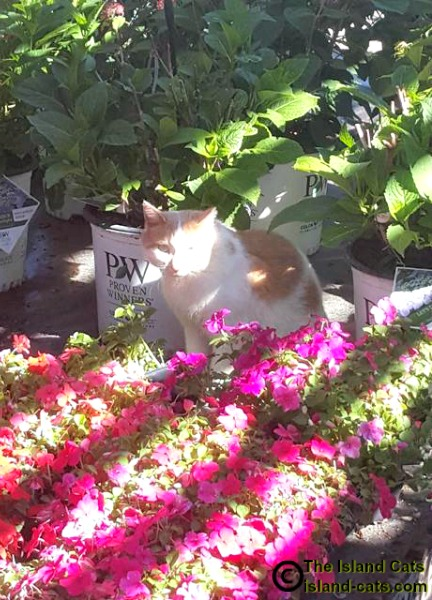 Cat sitting by flowers