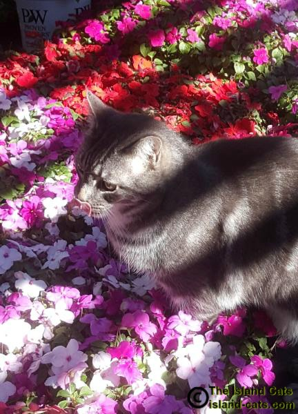 Cat sitting in flowers